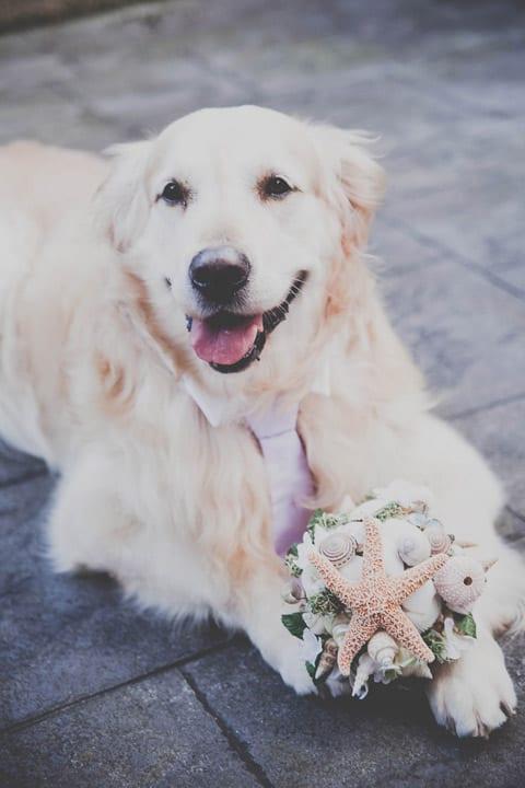 bouquet-novia-marinero-perro-bodas-itxasbide-20eventos-wedding-planners-san-sebastian